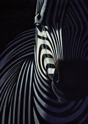 Xyl Hd Giclee Stampa Artistica Paesaggio Animale Zebra Pittura A