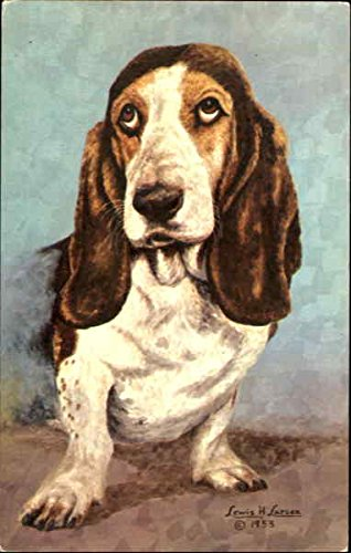The Basset Hound Dogs Original Vintage Postcard