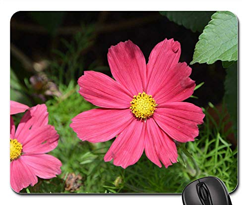 Mouse Pad - Red Flower Flower Been Nature Garden Parterre