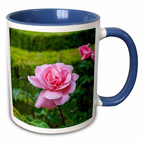 Mateus Rose - 3dRose Danita Delimont - Flower - Europe, Portugal, Vila Real, Palace of Mateus, rose in formal garden - 15oz Two-Tone Blue Mug (mug_227843_11)