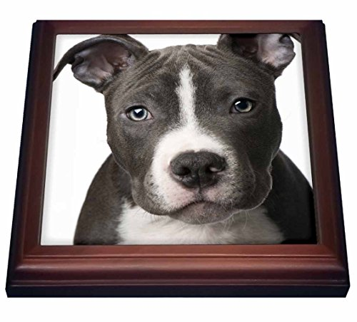 3dRose trv_4240_1 American Pit Bull Terrier Puppy Trivet with Ceramic Tile, 8 by 8