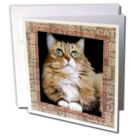 Susan Brown Designs Animal Themes - Fred the Cat - 6 Greeting Cards with envelopes (gc_110907_1)