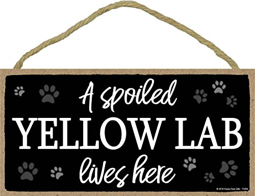 A Spoiled Yellow Lab Lives Here - 5 x 10 inch Hanging Labrador Retriever Gifts, Wall Art, Decorative Wood Sign Home Decor, Yellow Labrador Gifts