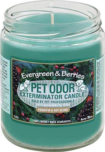 Pet Odor Exterminator Candle, Evergreen Berries,13 oz