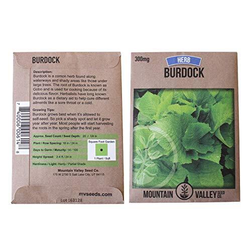 Burdock Herb Garden Seeds - Chiko - 300 mg - Non-GMO, Biennial Medicinal Herbal Gardening Seeds - Arctium ()
