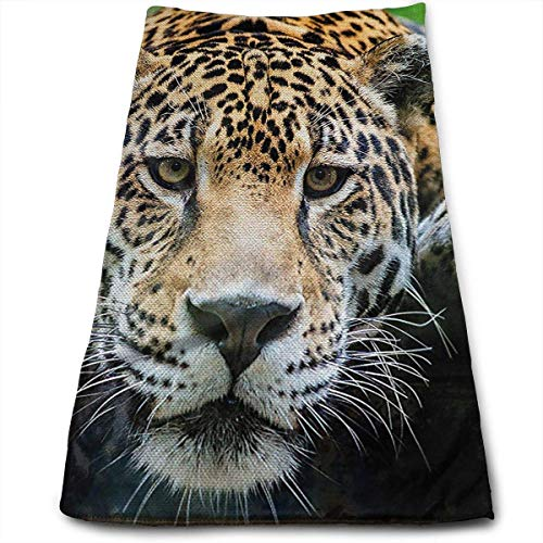 Hand Towels, Beach Towel, Sports Towel, Microfibre for sale  Delivered anywhere in Canada