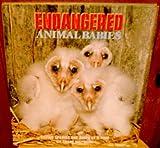 Endangered Animal Babies, Thane Maynard, 053111077X