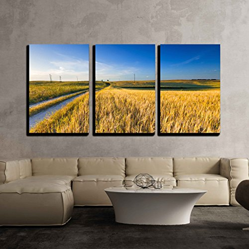 Sunset over Cereal Field with Grown Up Ears Beautiful Rural Countryside Landscape x3 Panels