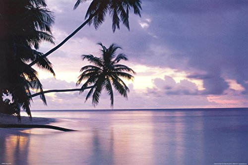 Tropical Sunset Palm Trees Over Water Art Poster Print