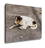 Ashley Canvas, Thai Stray Dog On Floor Pet, Home Decoration Office, Ready to Hang, 20x25, AG5892934