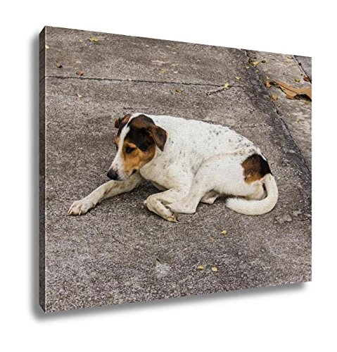 Ashley Canvas, Thai Stray Dog On Floor Pet, Home Decoration Office, Ready to Hang, 20x25, AG5892934 by Ashley Canvas