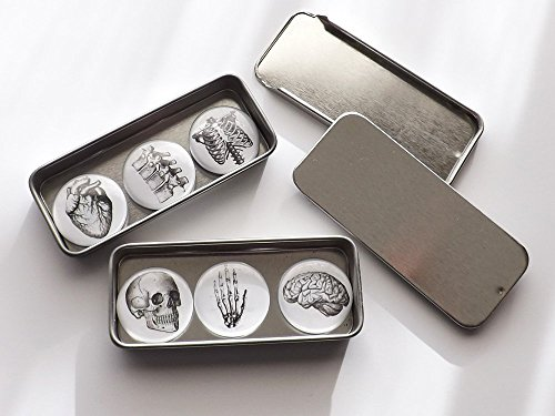 Anatomy Gift Set 2 slide top tins six 1 inch magnets stocking stuffers party favors skull brain anatomical heart ()
