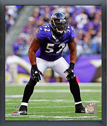 Ray Lewis Baltimore Ravens Action Photo (Size: 17