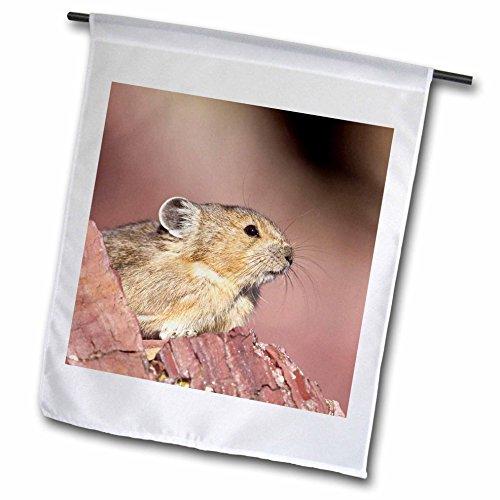 3dRose fl_92035_1 Pika Wildlife, Logan Pass, Glacier NP, Montana US27 CHA2598 Chuck Haney Garden Flag, 12 by 18-Inch ()