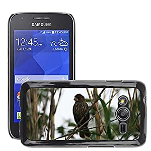 Etui Housse Coque de Protection Cover Rigide pour // M00110181 Grueso mandado la tejedor Pájaro // Samsung Galaxy Ace4 / Galaxy Ace 4 LTE / SM-G313F