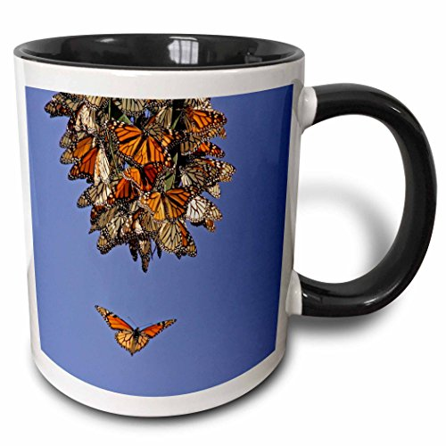 3dRose 3dRose California, Pismo Beach. Monarch butterflies - US05 BJA0167 - Jaynes Gallery - Two Tone Black Mug, 11oz (mug_88182_4), , - Outlet Pismo Beach