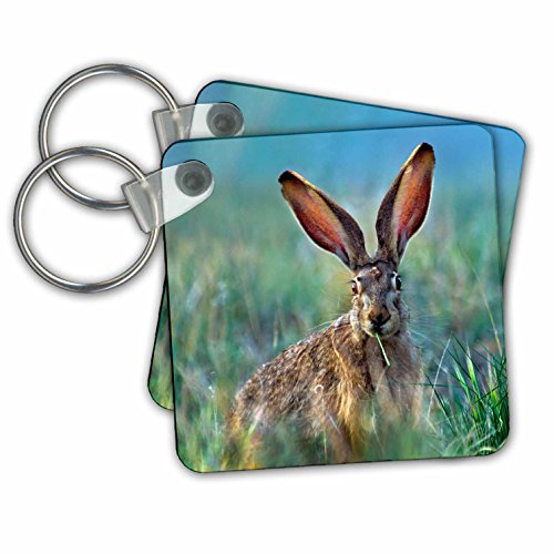 Danita Delimont - Rabbits - Blacktail Jackrabbit in a meadow eating grass, New Mexico - Key Chains - set of 2 Key Chains (kc_259772_1) (Rabbit Keychain Jack)