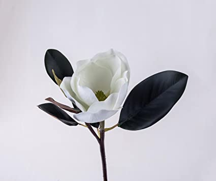 Buy Magnolia Flower Online At Low Prices In India Amazonin
