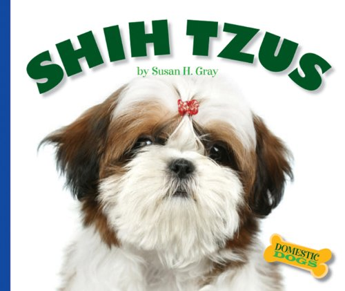 Shih Tzus (Domestic Dogs) - Gray Shih Tzu