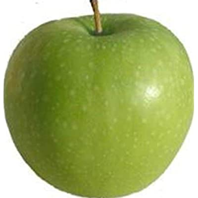 AchmadAnam - Live Plant - Apple Granny Smith Orchard Fruit Tree Standard 2-3 ft : Garden & Outdoor