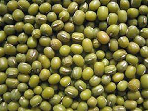 Mung Bean, Microgreen, Sprouting, , 14 OZ, Organic Seed, ...