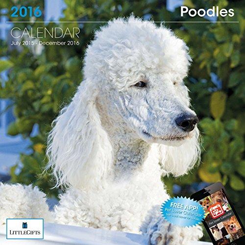 LittleGifts Poodle 2016 Calendar (1254)
