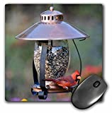 3drose Bird Feeders Review and Comparison