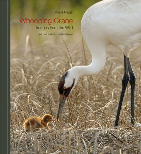 Amazon Whooping Crane Images From The Wild 9781603442091