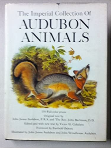 limited edition print Racoon Audubon Imperial Quadraped Reproduction