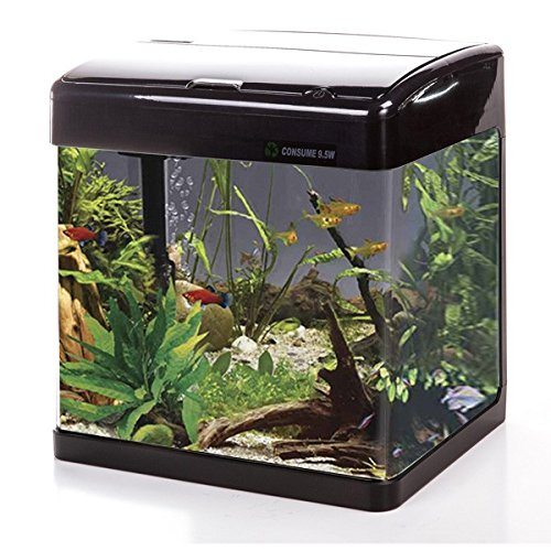 BLACK Betta Lifespace H3 Aquarium   19 Litres   Includes Touch LED Lighting & Filter (BLACK)