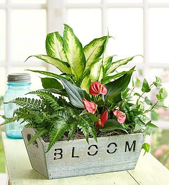 1800Flowers Bloom Dish Garden with Tropical Foliage and Plants