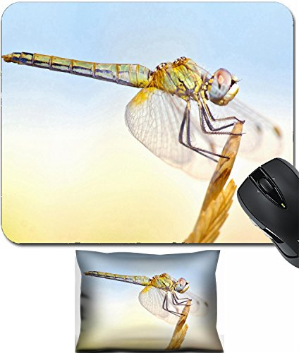 MSD Mouse Wrist Rest and Small Mousepad Set, 2pc Wrist Support design 21190501 Dragonfly with big eyes balanced on the tip of a branch in the summer sun ()