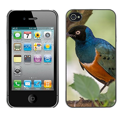 Premio Sottile Slim Cassa Custodia Case Cover Shell // F00014035 oiseau // Apple iPhone 4 4S 4G