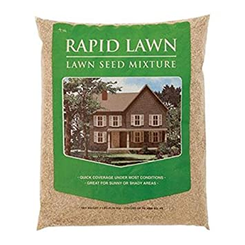 Mountain View Seeds Rapid Lawn   Seed Mixture