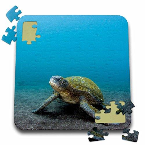 Danita Delimont - Turtles - Galapagos Green Sea Turtle underwater, Ecuador. - 10x10 Inch Puzzle (pzl_228958_2) (Galapagos Turtle)