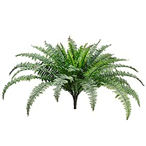 "25"" Boston Fern Bush x49  Green Frosted (Pack of 6 ) 82"