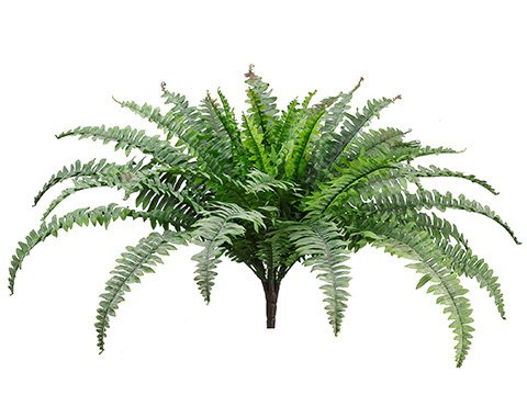 25-Boston-Fern-Bush-x49-Green-Frosted-Pack-of-6