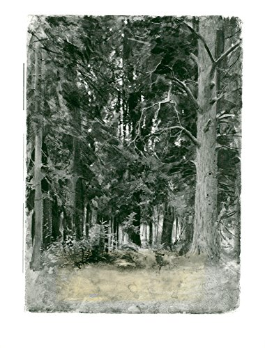 Forest Signed - Vintage photo of Study of a forest in Dalar246, signed Anders Zorn.