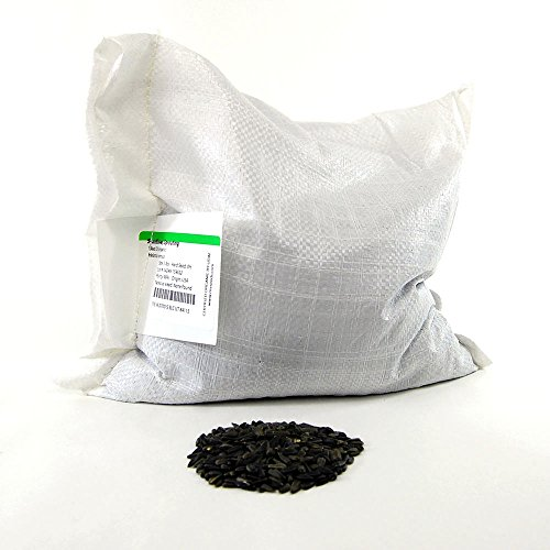 Whole Sunflower Sprouting Seeds: 25 Lb - Bulk, Black Oil Sun Flower Seeds (Shell On): Micro Greens, Gardening by Mountain Valley Seed Company