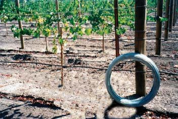 Grapevine Trellis Wire - 9 Gauge 170 Feet by Oklahoma Steel