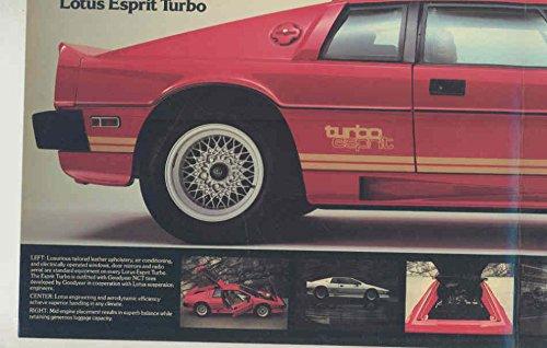 Amazon.com: 1980 1981 1982 1983 Lotus Esprit Turbo Brochure: Entertainment Collectibles