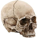 2.25 Inch Resin Realistically Painted Collectible Skull Head, Small