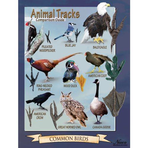 Nasco SB47894 Tracks of Common Birds Poster