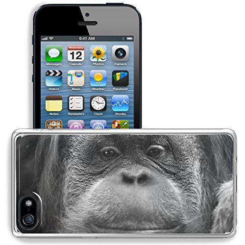 Msd Apple Iphone 5 Iphone 5S Iphone Se Clear Case Soft Tpu Rubber Silicone Bumper Snap Cases Iphone5 5S Orang Utan Monkey Portrait While Looking At Yuo Image 33721268 Customized Tablemats Stain Resis