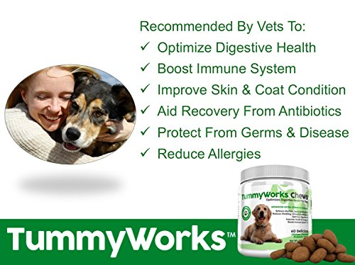 Cheapest TummyWorks Probiotic Chews for Dogs top very soft Chews Supplement To Relieve Diarrhea Yeast Infections Itching pores and skin Allergies Bad Breath Boosts Immunity Added Digestive Enzymes Made in USA 60 Check this out