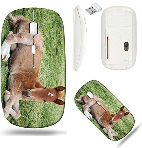 (Liili Wireless Mouse White Base Travel 2.4G Wireless Mice with USB Receiver, Click with 1000 DPI for notebook, pc, laptop, computer, mac book Little foal lying on green grass IMAGE ID 951825 )