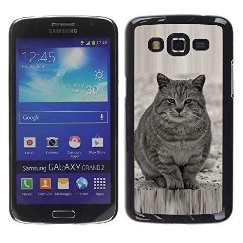 STPlus Gato en una caja Animal Carcasa Funda Rigida Para Samsung Galaxy Grand 2 #6