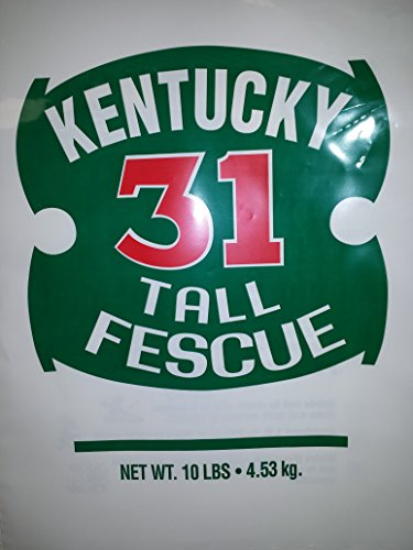 Kentucky 31 Tall Fescue - KENTUCKY 31 FESCUE 10 LB