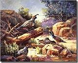 Desert Mountain Quail by Maxine Johnston - Southwest Bird Ceramic Tile Mural 21.25'' x 17'' Kitchen Shower Backsplash