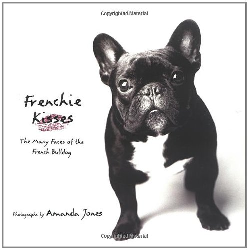 french bulldog for sale - 9